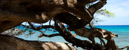 drywood: Trees and waters of Beach 69, Waialea, Big Island