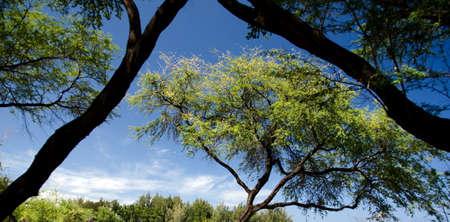 breakaway: Trees framing each other at Beach 69, Waialea, Big Island