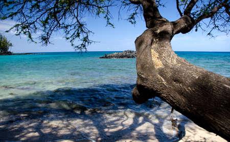 breakaway: Ironwood branches reaching rocks at Beach 69, Waialea, Big Island
