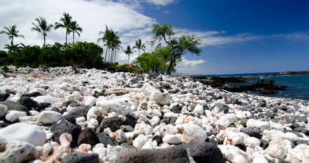 ironwood: White coral slope beach near Mauna Kea Beach, Big Island, Hawaii