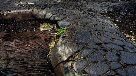 obrero: Campo de lava superficie de mosaico cerca cadena de cráteres Road, Volcán State Park, Big Island, Hawai