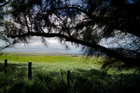 ironwood: Pines frame viewpoint at a farm near Kohala Mountain Road, Waimea, Big Island, Hawaii Stock Photo