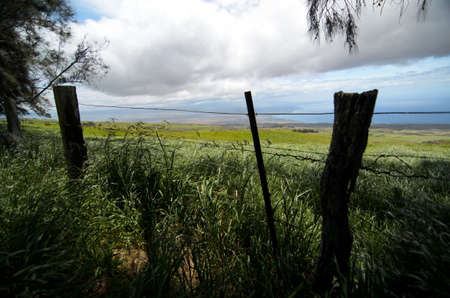ironwood: Ironwood and wired fences on Kohala Mountain Road, Waimea, Big Island Stock Photo
