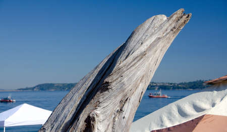 drywood: Dry wood piece in shape of a dolphin at Alki beach, West Seattle Stock Photo