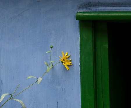 praha: Jerusalem artichoke near green door, Golden Lane, Prague Stock Photo