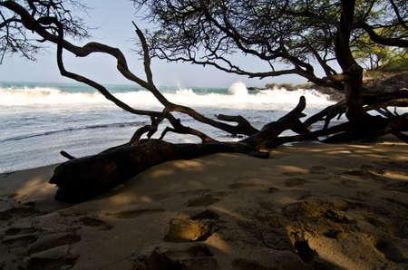 breakaway: In wet woods of beach 69 2-, Big Island, Hawaii Stock Photo