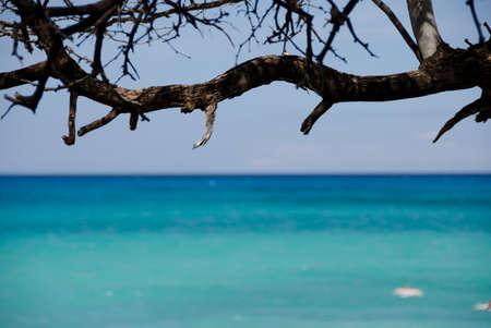 breakaway: Ironwood branch frames tranquility of beach 69, Big Island, Hawaii