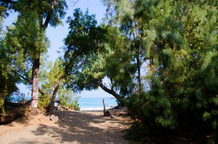 big island: Trail at entry of beach 69, Big Island, Hawaii