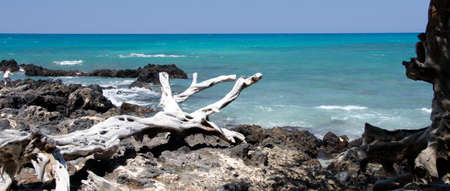 breakaway: Lava rocks and dry wood at Puako beach