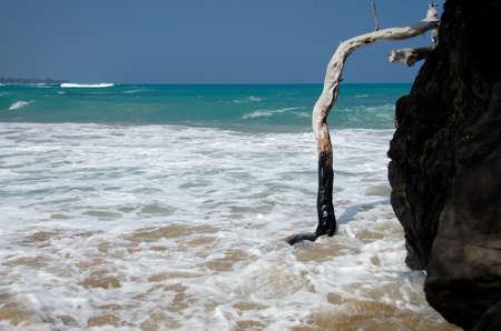 north end: Dry wood in surf on north end of beach 69, Big Island, Hawaii