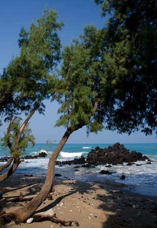 breakaway: Serene tree at entry to beach 69, Big Island, Hawaii