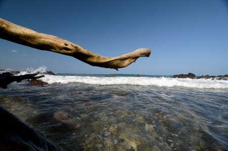 breakaway: Giant dry trunk at beach 69 - 2, Big Island, Hawaii