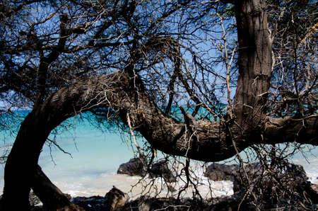 big island: Wooden web at beach 69 - 2, Big Island, Hawaii