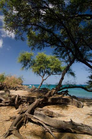 breakaway: Hiking in woods of beach 69 - 2, Big Island, Hawaii Stock Photo