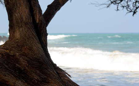 ironwood: Serene trees at north end of beach 69 - 2, Big Island, Hawaii Stock Photo