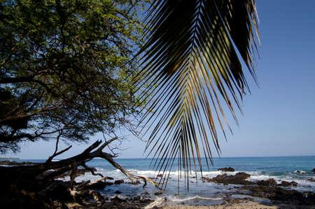 big island: Palm tree branch over reefs of Puako Beach, Big Island, Hawaii