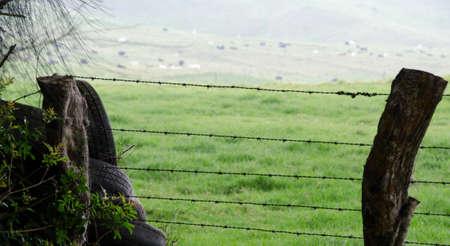 green ridge: Wired fence and recycled tires near Kohala Mountain Road, Waimea, Big Island, Hawaii