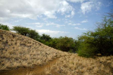 drywood: Hills near Hapuna beach, Big Island, Hawaii