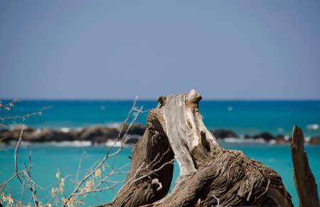 breakaway: Bit of wood at Puako beach, Big Island, Hawaii