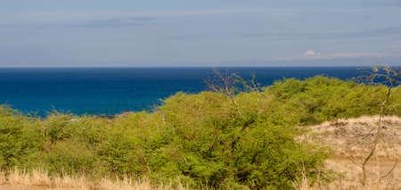 breakaway: Bushes near Hapuna beach, Big Island, Hawaii