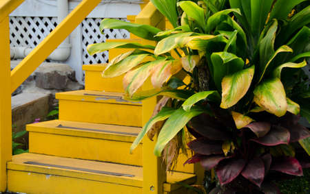 fern  large fern: Details of a colorful house in Kapaau village, Big Island, Hawaii Stock Photo