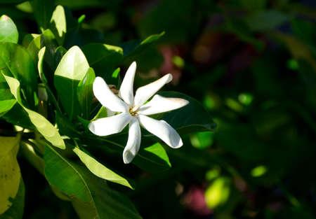 vegatation: White dendrobium flower in shadows of a garden near Waikoloa, Big Island, Hawaii