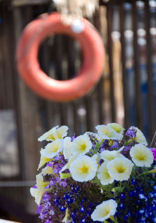 lifebuoy: Petunias and  life-buoy in float home village, Victoria, British Columbia