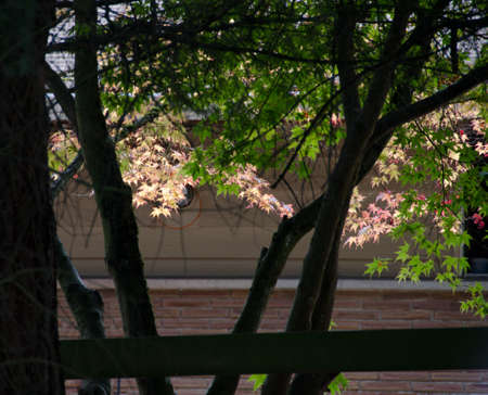 highlights: Shadows and highlights around maple trees in Seattle neighborhood on a late summer morning Stock Photo