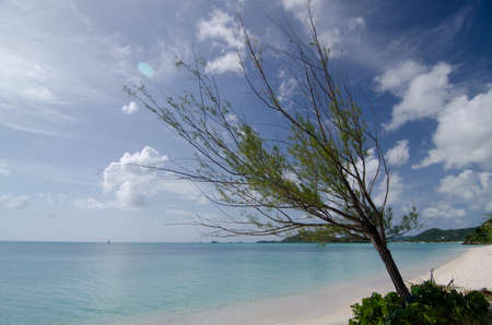 white sand: Pines and white sand of Church Valley beach on a hot afternoon, Antigua