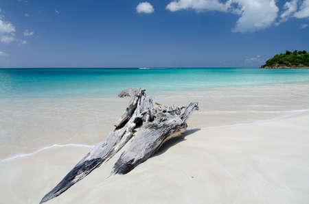 drywood: Drywood formations at Ffryes beach, Antigua and Barbuda