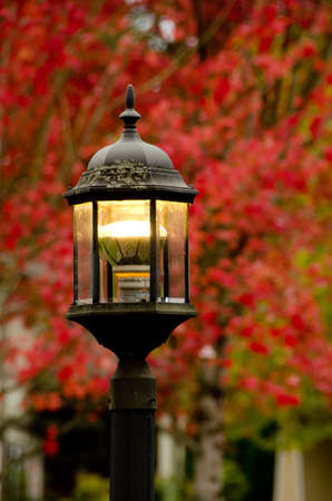 Street lamp in front of red maple foliage on a quiet alley in Seattle suburb