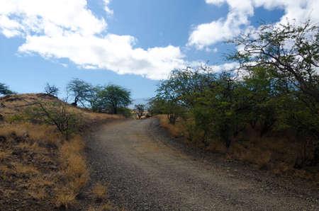 drywood: Summer heat on hills near Hapuna beach, Big Island, Hawaii. Stock Photo
