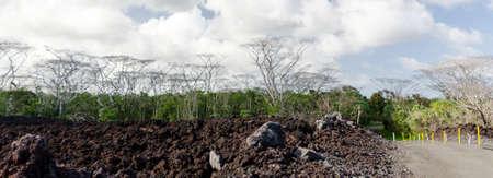 Dead Albizia trees on the road to Pohoiki  beach, Big Island, Hawaii