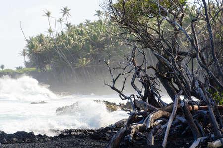 Surf hits tree coastline of palms and drywood at Pohoiki  beach, Isaac Hale Park, Hawaii