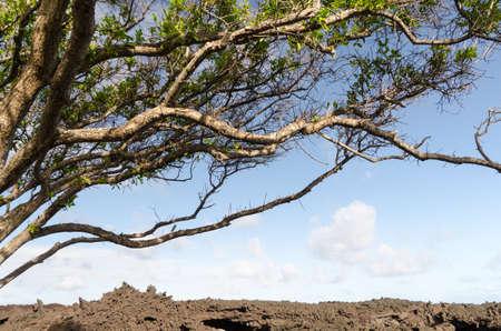 Lava rock wall at Pohoiki  beach,Isaac Hale Beach Park Big Island, Hawaii