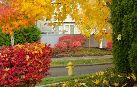 Hydrant framed by autumn foliage in Redmond suburb, Washington