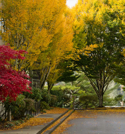Empty parking lot in fall season in office park in Redmond with golden and crimson tones in foliage 写真素材