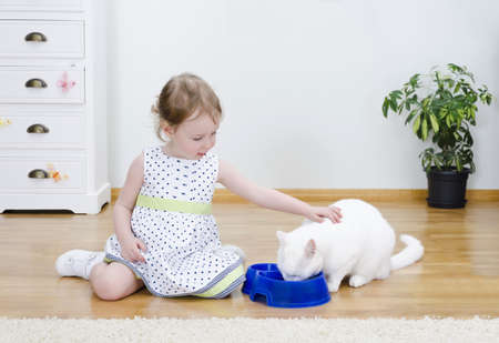 Little cute girl feeding a white cat photo