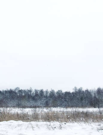 Dull snow winter landscape photo