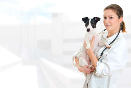 Female veterinarian holding jack russell terrier on hospital background photo
