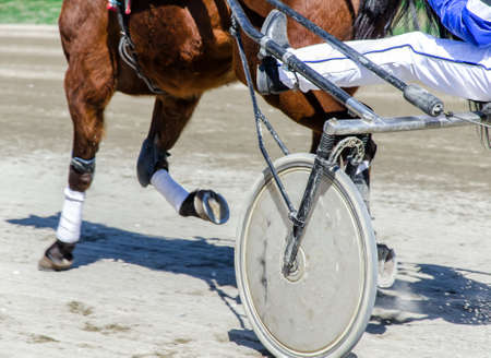 horse harness: Harness racing. Racing horse harnessed to lightweight strollers.