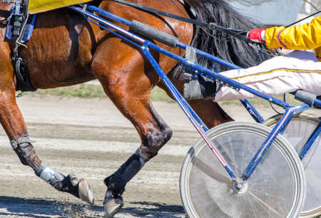 Harness racing. Racing horse harnessed to lightweight strollers. photo