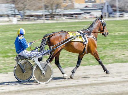 繋駕速歩競走。軽量ストローラに馬をレースします。 写真素材