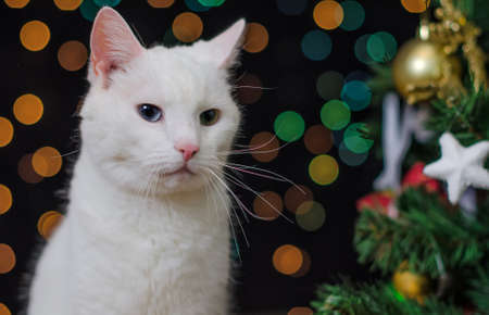 White cat over christmas tree and bokeh photo