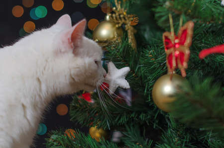 White cat sniffs christmas decorations on the tree photo