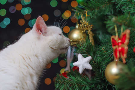 White cat sniffs christmas decorations on the tree Stock Photo - 23117658