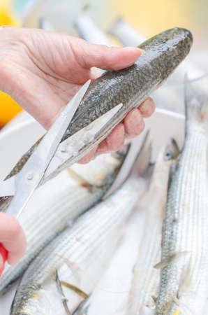 ingridients: Female hands cleaning fish with scissors. Stock Photo