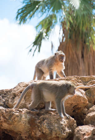 Two monkeys sitting on the stones. photo