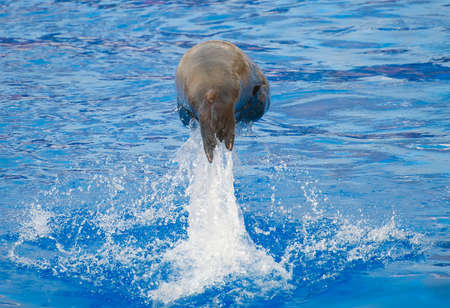 Marine seal jumping from water pool. photo