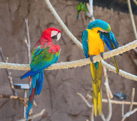 the two parrots: Two parrots sitting on branch in national park. Stock Photo